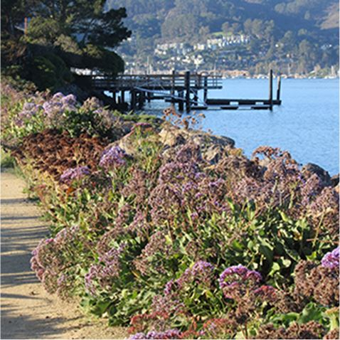 Seawall flowers