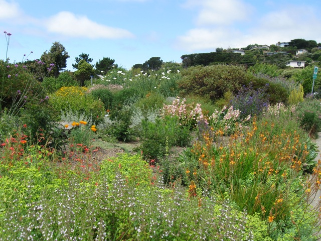 Blackies Garden